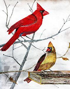 AB Cardinals